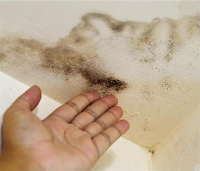 Mold Remediation 3 Strategies for Cleaning Up Small Mold Patches in Your Home