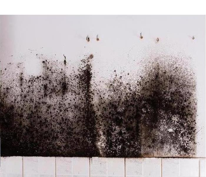 white wall covered with black mold